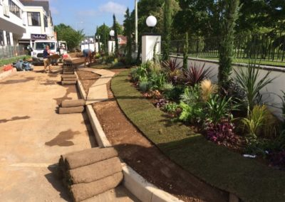 commercial turfing_planting